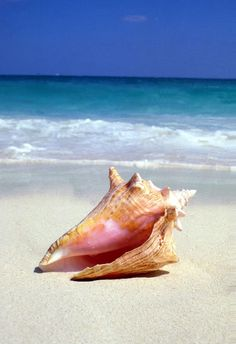 The World's Seven Best Natural Beauty Destinations Destination: Turks and Caicos Specialty: Conch shell massage. Hand-crushed queen conch shells mixed with aromatherapeutic oil makes for a gentle body scrub that gently polishes the skin. Beach Scenes, Am Meer, Sea Shells, Conch Shells, Ocean Life, Beach Pictures, Ocean Beach, Sea Creatures, Under The Sea