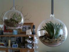 Succelent Terrarium Plants In Jars, Miniature Gardens, Glass Containers, Cool Plants, Houseplants, Terrarium, Garden Ideas, Succulents, Miniatures