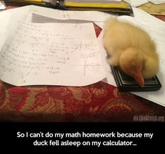 Heh... You mean he fell asleep on the quackulator..... Come on. You totally missed out on an awesome line.