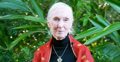 Primate expert Jane Goodall said in an email to the Cincinnati Zoo on Tuesday, May 31, that Harambe, the gorilla who was killed over the weekend, 'was putting an arm around the child' who fell into his enclosure — read more