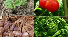 The Most Cost Effective Vegetables To Grow