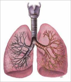 The difference between CF lungs and normal lungs. Cure CF
