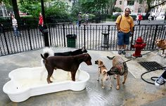 Pooches try out one of cool pools at newly renovated dog run in Tompkins Square Park in the East Village. Nine-month project to spruce up city's first dog park cost $325,000.
