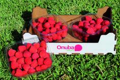 Nuevas Variedades de frambuesa de Onubafruit-