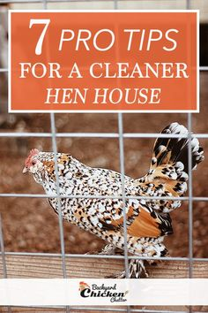 To have a clean hen house, you need to apply a few helpful tips. These tips include cleaning the roosting and laying areas, clearing the walk-ways, repairing, spraying and fumigation. Chicken Shed, Diy Chicken Coop Plans, Clean Chicken, Best Chicken Coop, Chicken Coops, Keeping Chickens, Raising Chickens, Pet Chickens, Chickens Backyard