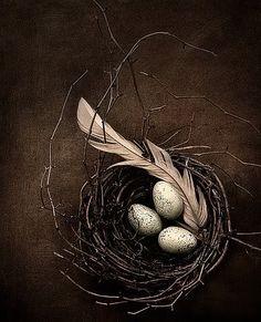 artistic nest