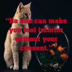 """No one can make you feel inferior without your consent.""... - shared via pinterestpicture.com"