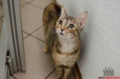 Mamuśka is looking for a home #cute #cutecats #cats #caturday #kot #koty #neko #gato #katz #katzen #kittens #chat