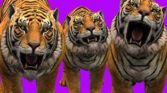 Finger Family || TIGER  Version || Children Animated 3D Rhymes