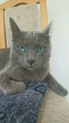 When you say something stupid, and i'm like... #cat #cutepets #blueeyes