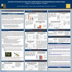 Poster Presented at Entomology conference - research on strategic sperm allocation