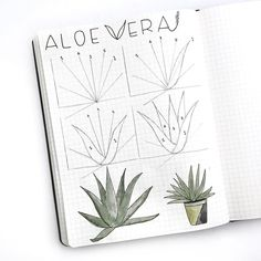 "781 Likes, 9 Comments - Illustrator • Jennifer Reyes (@inkbyjeng) on Instagram: ""Happy Friday #bujofriends. Here's the first #doodletutorial for June. It's an Aloe Vera plant. 〰…"""