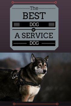 best #dog is #service #dog