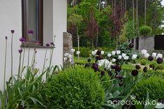 Jak zamienić glinę w wymarzony skrawek Ziemi. - strona 322 - Forum ogrodnicze - Ogrodowisko