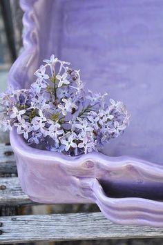 Lavanda, viola e lillá | ❤❤❤  L ♥ V E