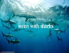Bucket List - Swim with sharks  (preferably protected in a cage)