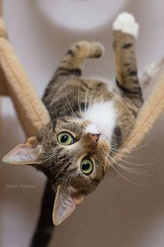 Why iz u upside down?