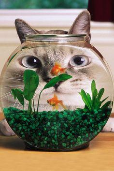 Cat or fish