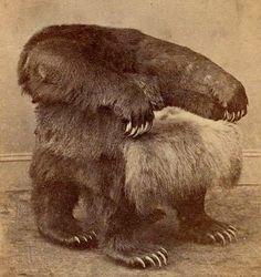 Bear Chair! | Album of Awesomeness
