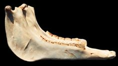 Image result for The Donkey Ass Jaw Bone The Donkey, Blessings, Blessed, Peace, Songs, Song Books, Sobriety, World