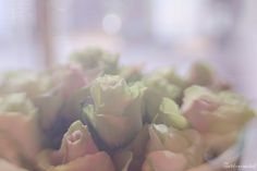 #Lensbaby #Roses #Valentines day