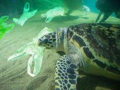 Colima Sea Salt by Ava Jane's Kitchen Ocean Pollution, Plastic Pollution, Pet Turtle, Ocean Turtle, Ocean Day, Underwater Life, Underwater Photos, Oceans Of The World, Marine Life
