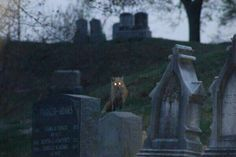 Find images and videos about grunge, dark and creepy on We Heart It - the app to get lost in what you love. Pet Cemetery, Southern Gothic, Macabre, Dark Side, Autumn Leaves, Creepy, Grunge, Horror, Pictures
