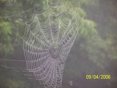 https://scontent-a-ord.xx.fbcdn.net/hphotos-ash3/t1/9021_100329049985118_596358_n.jpg...this web was in our backyard.