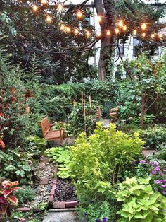 I want to have that cozy feeling, but my back yard lot is so empty. I need seating, lighting without electricity, and color. Alex's Cozy Garden Apartment in Brooklyn