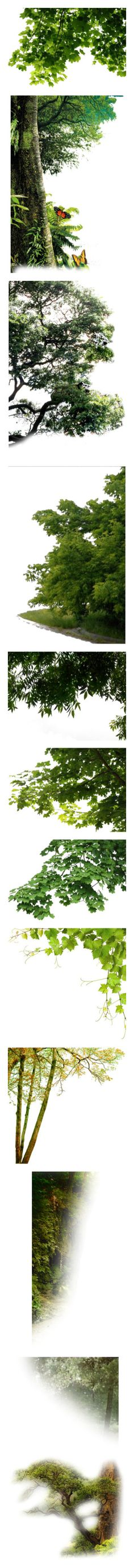 """Trees"" by sjk921 ❤ liked on Polyvore featuring trees, garden, greenery, plants, fade, filler, backgrounds, flowers, nature and tubes"