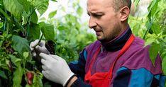 Blä, blä bladlus! 6 miljövänliga sätt att bli av med de äckliga krypen | Land