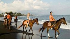 Activity of the week: Horse Riding in Bali Plunge saddle-deep into an unforgettable horse riding experience with a passionate stable owner. Ride along a stunning backdrop of the black, volcanic sand and the crashing waves of Pererenan Beach as she tells you fascinating stories of her childhood spent with horses. You cannot even begin to imagine how scenic this is!  ‪#‎bali‬ ‪#‎vacation‬ ‪#‎holiday‬ ‪#‎horseriding‬ ‪#‎travel‬ ‪#‎indonesia‬