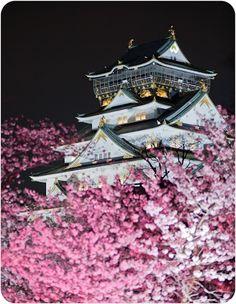 Cherry blossom at Osaka Castle