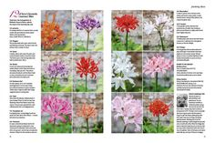 Take a look inside the October issue - out now | Gardens Illustrated
