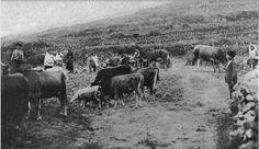 Campos de Fisterra  - 1926 - Foto de Ávila Cuadra.