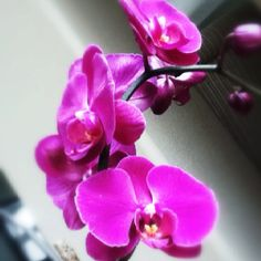 Orchids for Valentine's Day