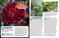 Get Growing : 8 July 2016, Page 25