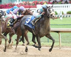 Tom's Ready roared past last year's male sprint champ Runhappy to win the one-turn mile Ack Ack Stakes (gr. III) Oct. 1 at Churchill Downs. The son of More Than Ready got the trip in 1:34.86.