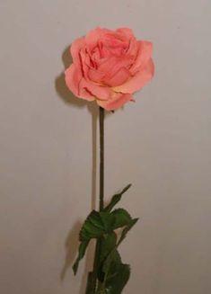 14-Rosa-open.jpg (432×600)