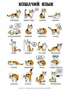Cat language - your daily dose of funny cats - cute kittens - pet memes - pets in clothes - kitty breeds - sweet animal pictures - perfect photos for cat moms Funny Cats, Funny Animals, Cute Animals, Baby Animals, Cats Humor, Funny Horses, Wild Animals, Cute Kittens, Cats And Kittens
