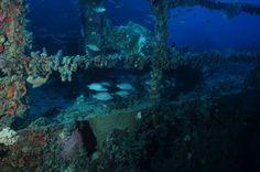 Buceo submarino en las ruinas de un naufragio bajo las aguas de Isla Larga,estado Carabobob,Venezuela