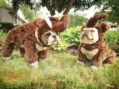 """I feel like a wooly mammoth"",.""that's funny, I just feel FAT"", French Bulldogs in costumes. Bulldog Halloween Costumes, Bulldog Costume, Puppy Costume, Bulldog Puppies, Cute Puppies, Cute Dogs, Cute Animal Videos, Cute Animal Pictures, Animal Pics"