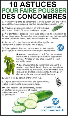 10 market gardening tips for growing beautiful cucumbers