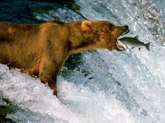 Best Of Wildlife - Most Amazing and Funny Pictures and Videos