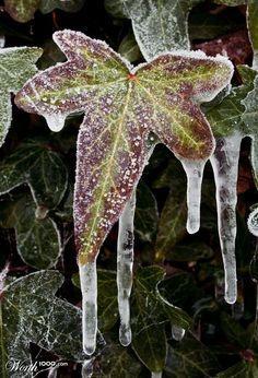 Naturaleza helada.  http://www.alotroladodelcristal.com/search/label/FLORES%20Y%20PLANTAS