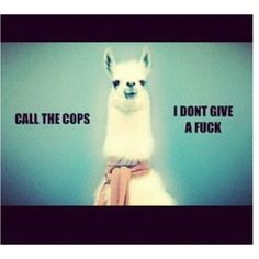 It's funny because it's a llama...@Analisa Scofield