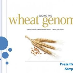 Presented By Sampath   Why…?  Wheat – Important cereal crop  Food- 30% of the world population, Rich in nutrients  Challenges : Increasing population,. http://slidehot.com/resources/the-wheat-genome.33946/