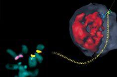 Nuclear membrane repairs the 'dark matter' of DNA