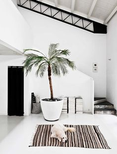 9 Refreshing Ways to Decorate With House Plants | COCOCOZY