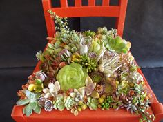 Succulent chair! Photo/Designer Laura Eubanks at Design For Serenity.
